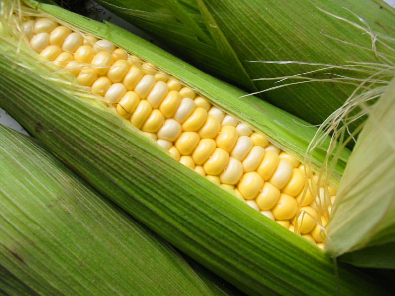 Agriculture Ministry pushes for cultivation of imported crops