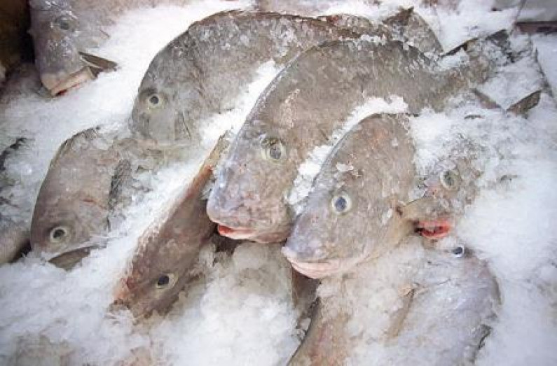 135 pounds of cocaine busted in shrimp and frozen fish at CJIA