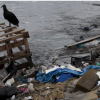 Rio 2016: Organisers' pollution challenge in Guanabara Bay