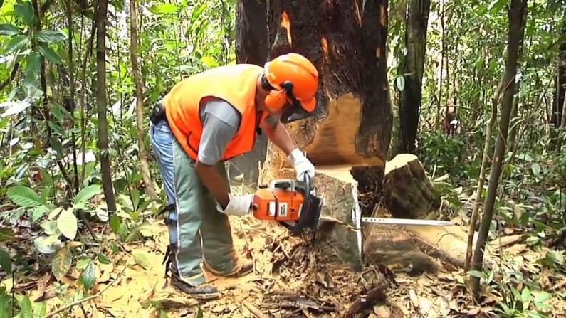 Small and medium-scale operators receive more concessions in forestry sector