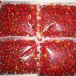 Cocaine in wri wri pepper from Guyana busted in Trinidad