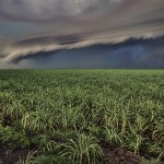 sugar-cane-fields-storm-lake-okeechobee-florida
