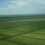 Trinidad farmers to get 10,000 acres of Guyana land for agriculture
