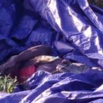 Man's body found wrapped in tarpaulin in South Ruimveldt