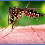 United States CDC warns of Chikungunya in the Caribbean