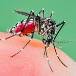 Chikungunya virus spreads to other parts of the country
