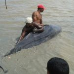 Whale washes up on West Coast Berbice seaside