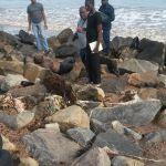 Man found dead on seawalls