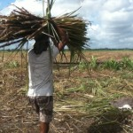 Government releases $3.8 Billion bailout for Guysuco