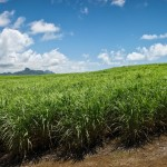 Guysuco surpasses 2015 sugar production target