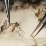 Zika virus: Sexual transmission 'more common than thought'