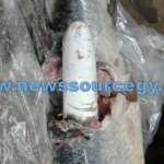 BREAKING: Over 175 lbs cocaine busted in frozen fish at Cheddi Jagan Airport; WCD man arrested