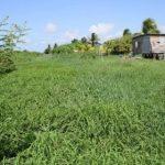 Housing Department seeking land to accommodate squatters