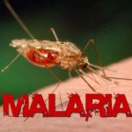 Efforts underway to tackle malaria spread in Hinterland regions