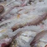 Guyana was given time to get fishing industry in order to meet US import regulations   -US Embassy