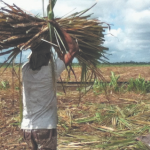 Retrenched sugar workers to receive remaining severance pay