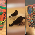 Passenger from Guyana held at JFK with 70 live birds in hair curlers
