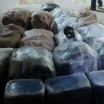 CANU and Police unearth 540lbs marijuana in Cambell Avenue operation; 2 arrested